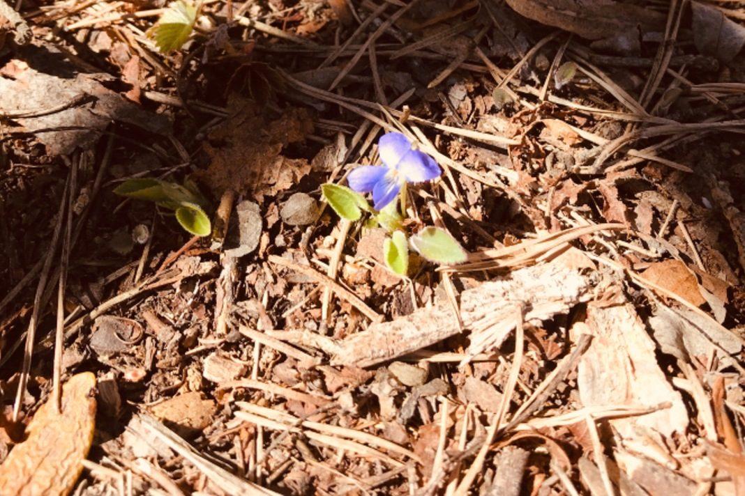 Stupirsi per un fiore che sboccia nascosto nel bosco