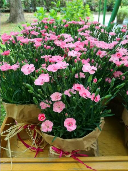 Piante di fiori: quando le mamme diventano amiche