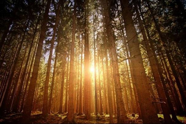 La luce del bosco che illumina l'imperfezione che siamo